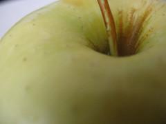 dixon apples 038