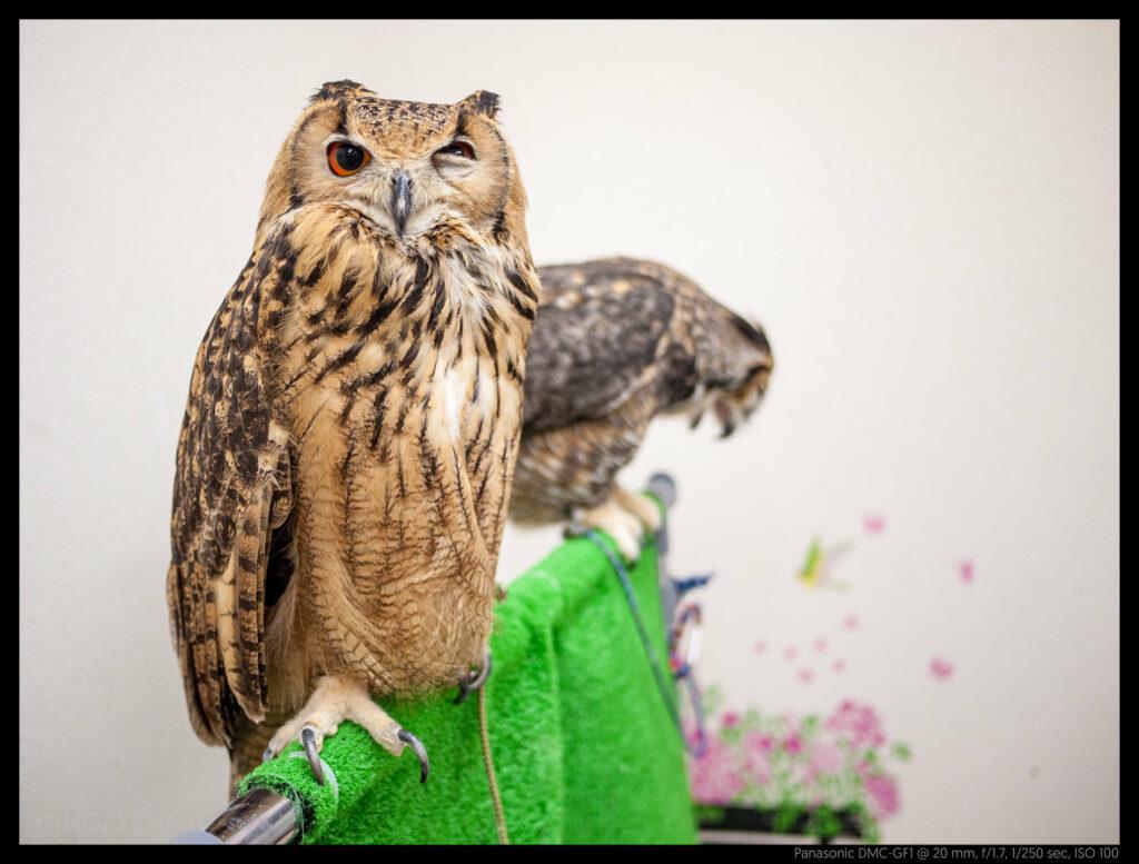 owlcafe (10 of 14)
