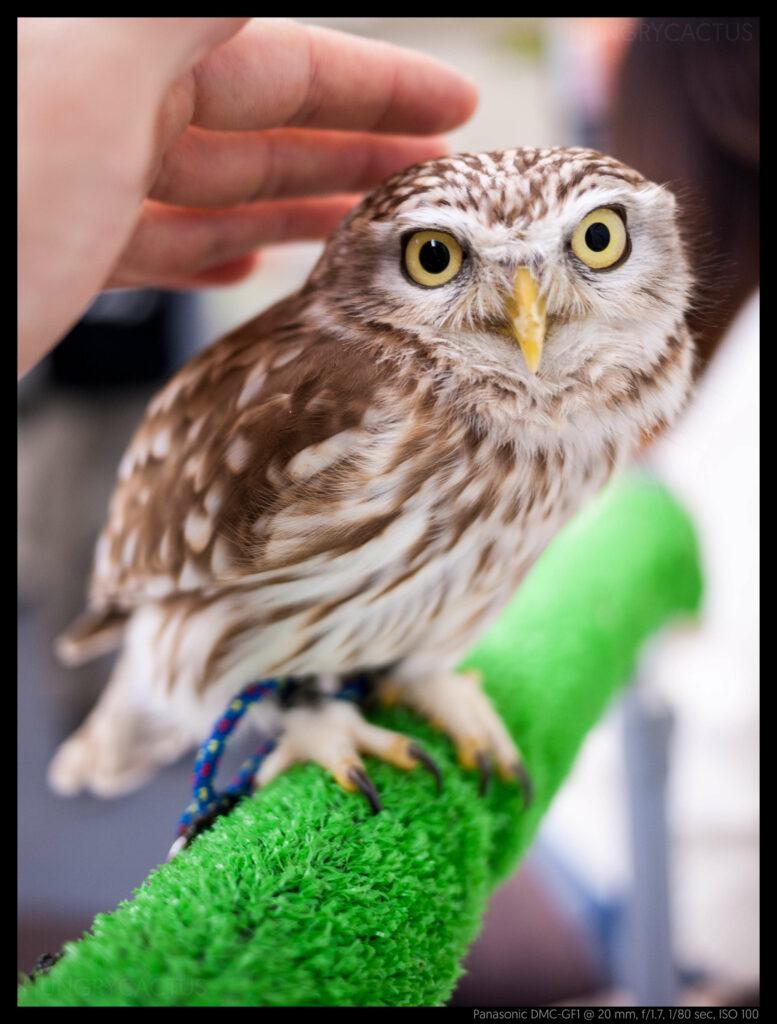 owlcafe (11 of 14)