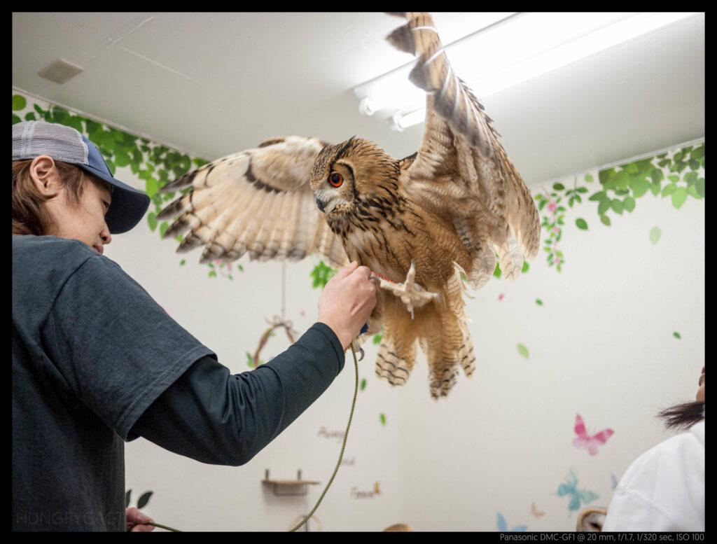 owlcafe (12 of 14)