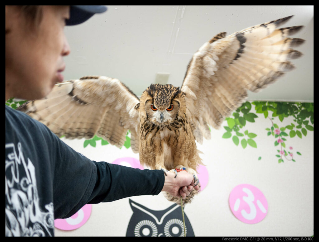 owlcafe (13 of 14)