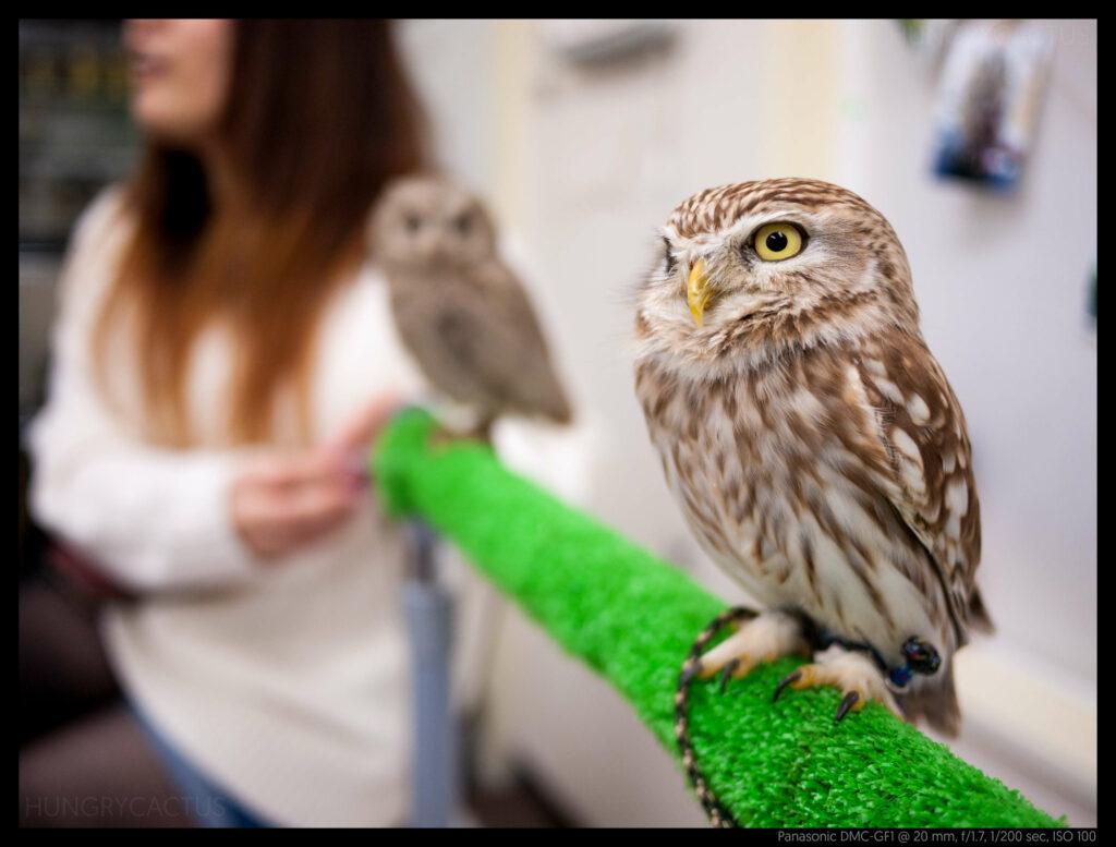 owlcafe (14 of 14)