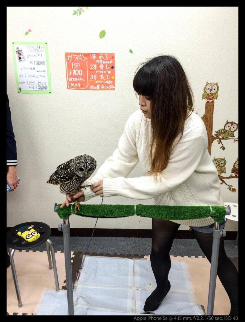 owlcafe (2 of 14)