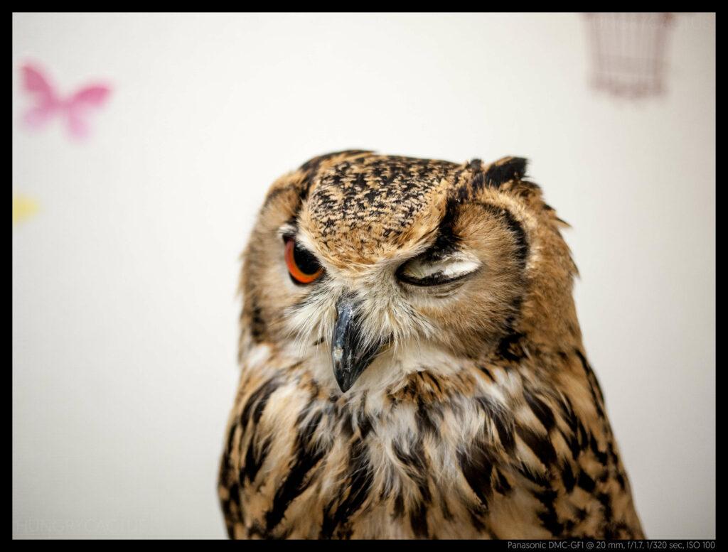 owlcafe (5 of 14)