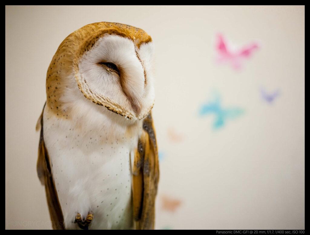 owlcafe (6 of 14)