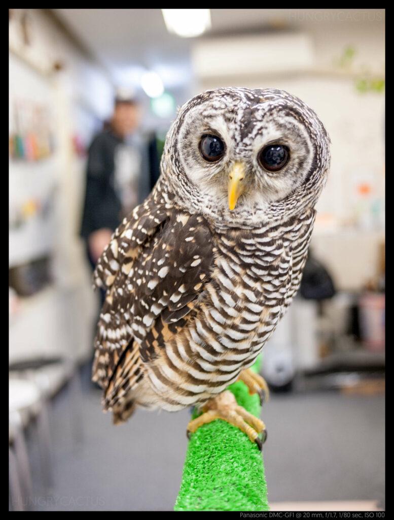 owlcafe (7 of 14)