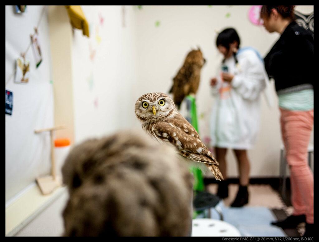 owlcafe (9 of 14)